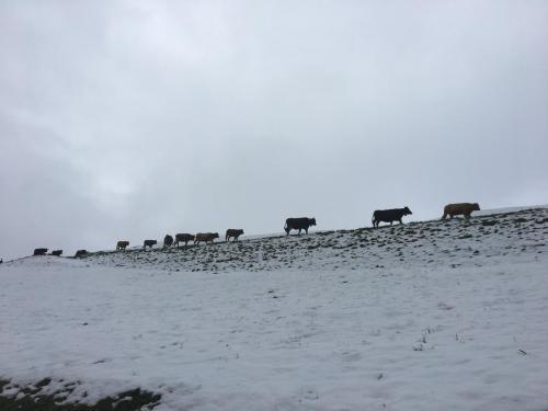 Winteralpabzug